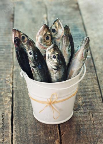 Raw fish (scad) in bucket