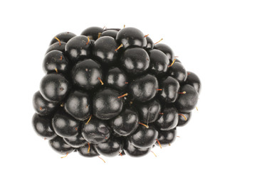 Single blackberry isolated in white