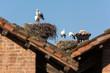 Nidi di cicogne tra i tetti
