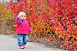 toddler walk along bushes