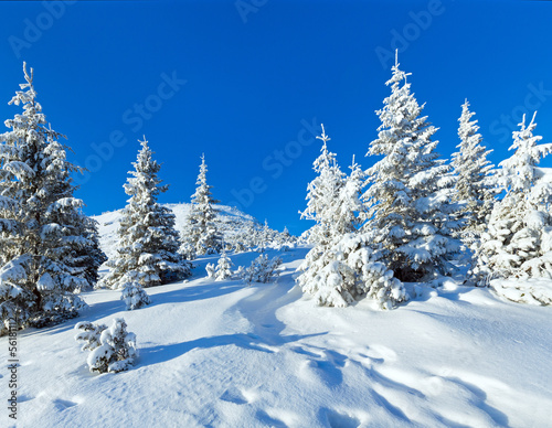 Morning winter mountain landscape