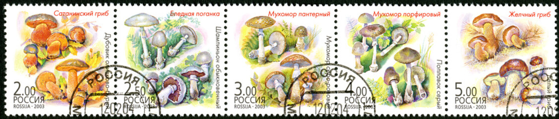 RUSSIA - 2003: shows twin mushrooms, edible and poison mushrooms