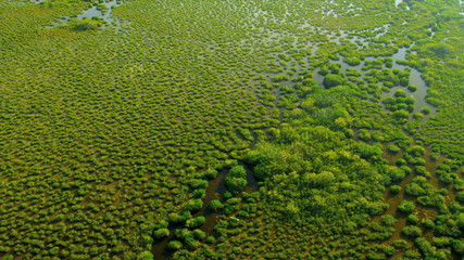 Aerial view Everglades  largest Sub tropical region in USA