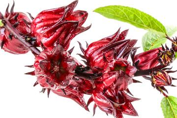 roselle fruits