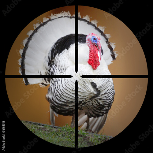 The Turkey in the Hunter's scope.