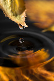 Autumn leaf with a drop over water
