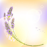 Purple Lavender Flower Colorful Background