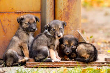Homeless puppies stand together