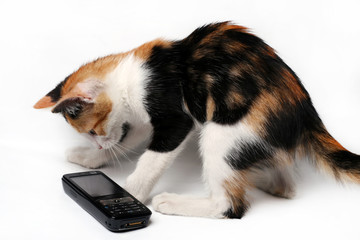 Cat - kitten playing with mobile phone