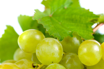 Bunch of fresh green grapes