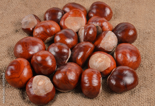 Fresh whole autumn chestnuts