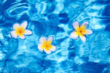 Tropical frangipani flower in water