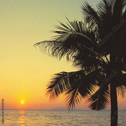 Coconut palm tree with sunrise and retro filter effect © Nongnuch Leelaphasuk