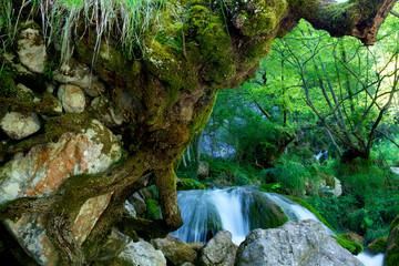Radice di albero su roccia.