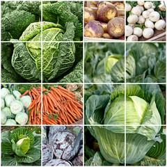Gemüseangebot, bio