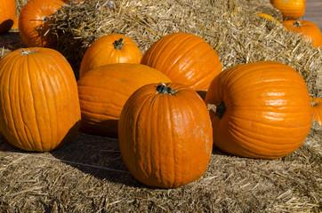 zucche e paglia per la feasta di halloween