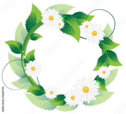 Daisies with green leaves