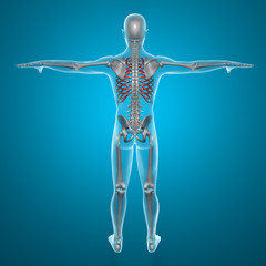 Gabbia toracica corpo umano ai raggi x