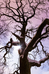 Moon shine through big fairytale tree at night