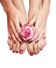 beautiful legs, hands, flowers and petals isolated
