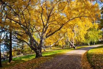 Peaceful park with autumn colors in trees