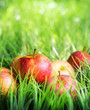 Red apples on green grass