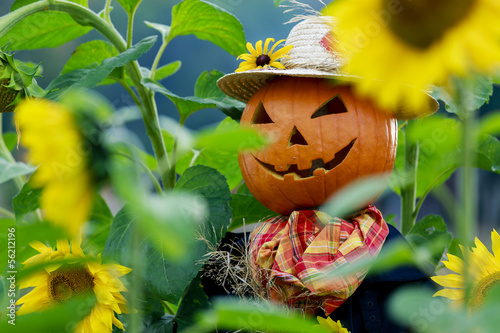 Sunflowers and Scarecrow in the garden