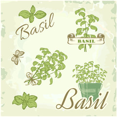Basil, herb, plant, nature, vintage background, packaging