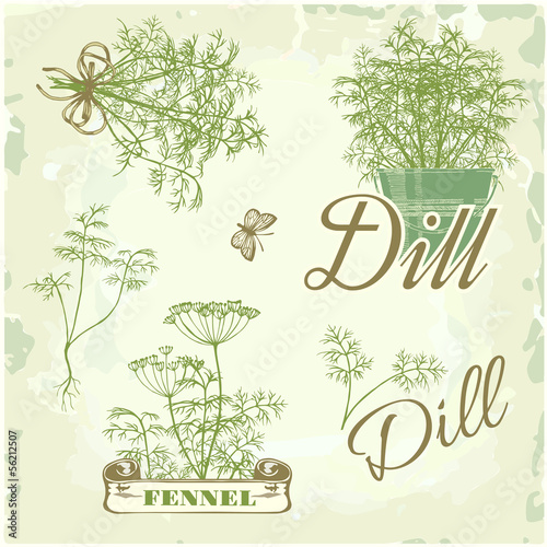 fennel, dill, herb, plant, nature, vintage background, packaging