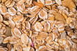 Background of muesli