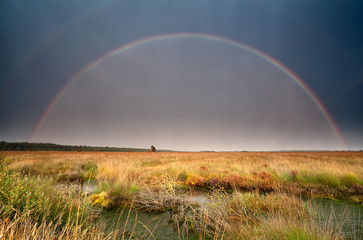 big rainbow over bog after summer storm