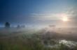 dense fog over marsh at sunrise