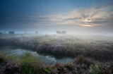 misty sunrise over swamp with flowering heather