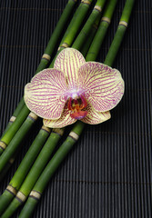 Pink orchid and thin bamboo grove on stick straw mat