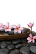 frangipani flower in wooden bowl on wooden board