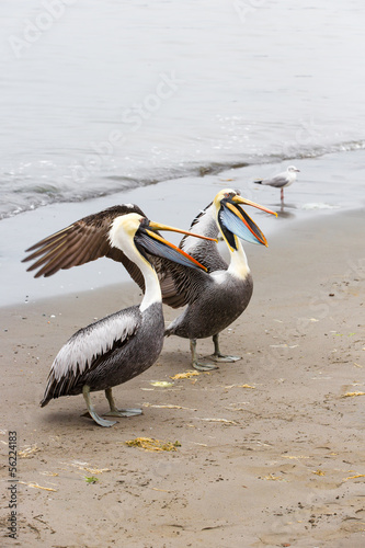 Pelicans on Ballestas Islands in Paracasю Peru. South America