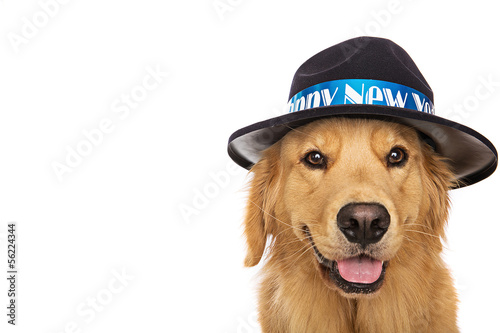 golden retriever dog wearing New Years Eve hat