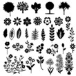Black and white flora collection
