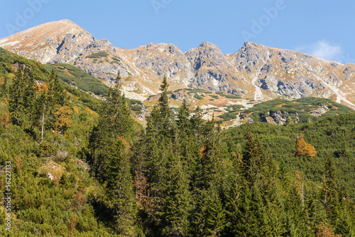 forested slopes in Western Tatras