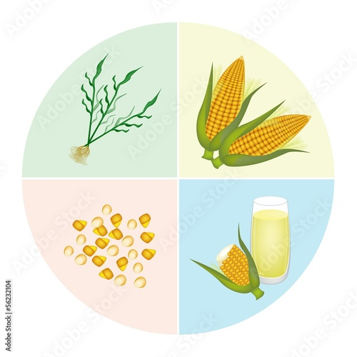 The Process of Corn Production in Pie Chart