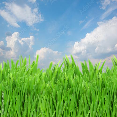 Fototapeten,frühling,grün,gras,abstrakt