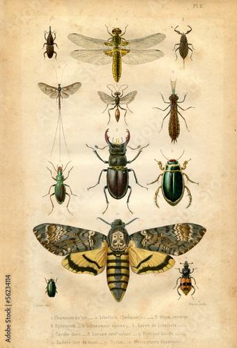 Deurstickers Vlinder Histoire naturelle : Les insectes