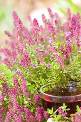 Чашка горячего чая в цветущем чабреце