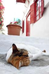 Katze in Mykonos