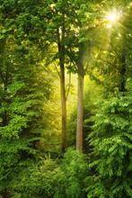 Złote słońce świeci przez drzewa