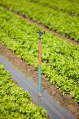riego de cultivo