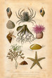 Histoire naturel : Fond Marin - 56243938