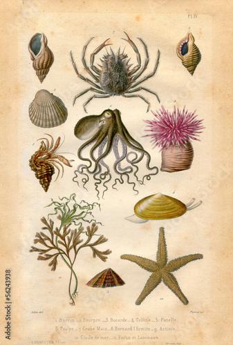 Leinwandbild Motiv Histoire naturel : Fond Marin