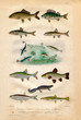 Histoire naturelle : Fish