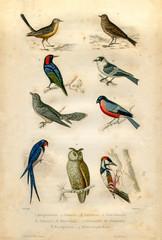 Natural history : Birds